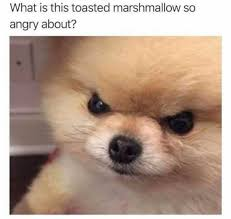 Meme Angry - dopl3r com memes what is this toasted marshmallow so angry about