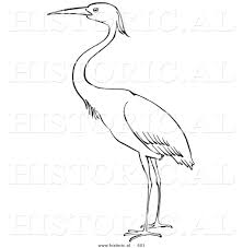 historical vector illustration of a heron bird standing and