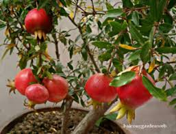 fruit trees for your backyard orchard how to grow