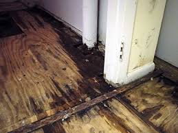 How To Dry Flooded Basement by Rotting Basement Floors Basement Flooring Damaged By Rot Mold