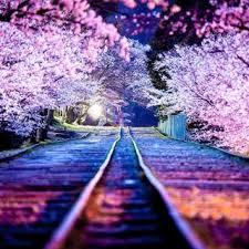 japan flower tunnel wisteria flower tunnel amazing planet news
