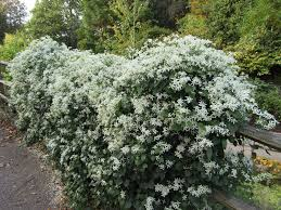 white for fallads hbt osmocote sept2017gardening sessionfrom the article photo