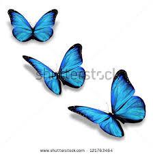 three blue butterflies isolated on white stock illustration