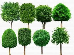 free trees psd