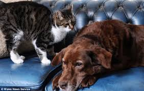 Blind Dog And His Guide Dog Stray Cat Enters The Home Of A Blind Dog And Becomes His Guide