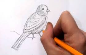 how to draw a bird real time quick sketch youtube