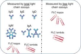 heavy chain light chain serum free light chain assays not total light chain assays are the