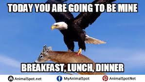 Funny Eagles Memes - bald eagle memes