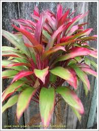 Tropical Potted Plants Outdoor - 91 best little bit of simple beauty images on pinterest tropical