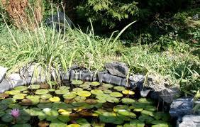 Vasche Da Giardino Per Pesci by Come Eliminare Le Alghe Nel Laghetto Petingros