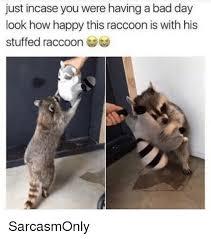 Funny Raccoon Meme - 25 best memes about raccoon raccoon memes