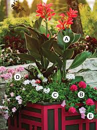 create bold dramatic container gardens
