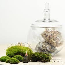 moss terrarium headstand diy kit u2013 ps terrariums