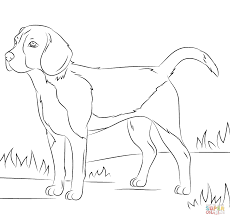 beagle dog coloring page throughout puppy coloring pages