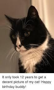 Cat Happy Birthday Meme - 25 best memes about cat happy birthday cat happy birthday memes