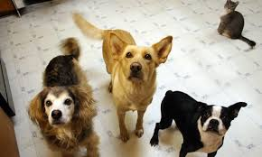dog food and diet tips to keep your dog healthy and avoid dog