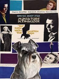 black friday canvas prints miniature schnauzer vintage poster canvas print gilda movie