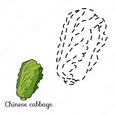 connect the dots fruits and vegetables chinese cabbage u2014 stock