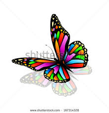rainbow butterfly stock images royalty free images vectors
