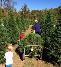 timberhill christmas tree farm home facebook