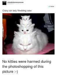 Crazy Cat Meme - 25 best memes about crazy cat lady crazy cat lady memes
