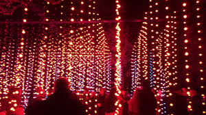 enchanted forest christmas lights curtain of light the enchanted forest 2016 youtube