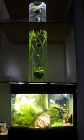 Japanese Aquascape by 143 Best Aquascape Images On Pinterest Aquarium Ideas Planted