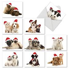 cards with cats and dogs in santa hats cat pause