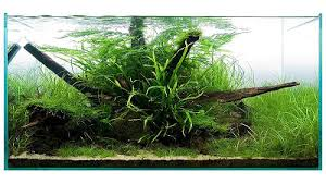 aquatic eden aquascaping aquarium blog