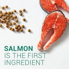 nutro limited ingredient diet grain free salmon u0026 lentils