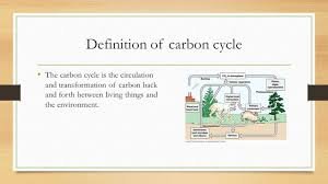 definition of floor plan carbon cycle by david taylor jade ppt video online download
