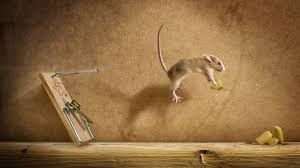 rodents escape mouse funny trap food on9e6mxs v0 background