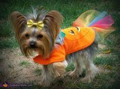 Yorkie Halloween Costumes Yorkie Halloween Costume Animales Yorkies Dog Cat