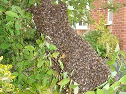 bees removal in newport mr wasp