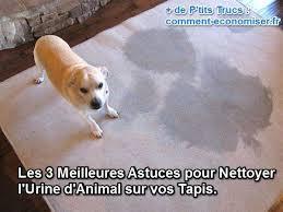 nettoyer pipi de chien sur canapé les 3 meilleures astuces pour nettoyer l urine d sur vos