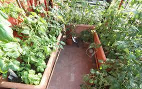 urban vegetable garden in a terrace of a house stock photo