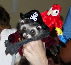 Ferret Costumes Halloween 25 Favorite Halloween Pet Costumes 2011 Inotternews