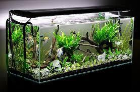 Aquascape Designs For Aquariums Aquascaping Planted Aquarium Aquascaping Aquascape
