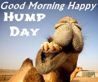 Hump Day Camel Meme - humpday pictures photos images and pics for facebook tumblr