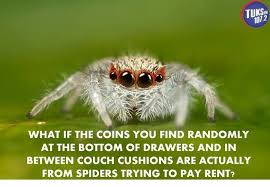 Cute Spider Meme - cute spider pictures tarantula forum