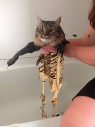 Cat Meme - this new wet cat meme is dominating the internet fun