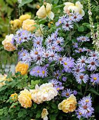 Summer Gardening - summer gardening guide annie u0027s annuals