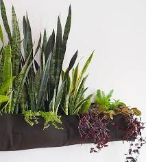 Indoor Gardening Ideas Indoor Gardening Ideas