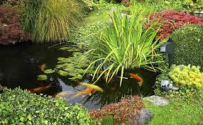 How To Make A Koi Pond In Your Backyard How To Keep Herons Out Of Your Koi Pond