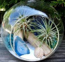 air plant terrarium kit large hanging terrarium glass air plant