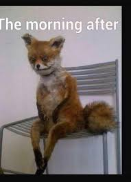 Morning After Meme - hungover fox regrets no regrets good choices funny pictures the