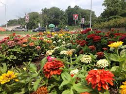 Rock Gardens Brighton Brighton Heights Citizens Federation Donate To The Flower Fund