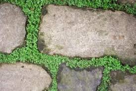 Moss How To Eliminate Paver Grass And Moss Home Guides Sf Gate