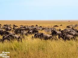 safari how to plan the best safari in tanzania u2013 the bizarre globe hopper