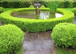 Garden Hedges Types Best Hedges To Plant Fast Growing And Elegant Privacy Hedges